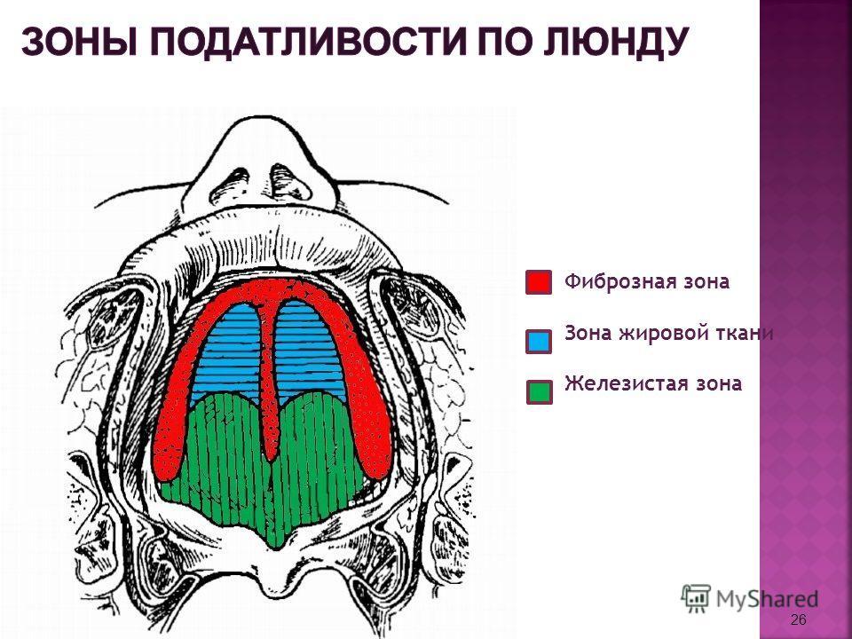 26 Фиброзная зона Зона жировой ткани Железистая зона