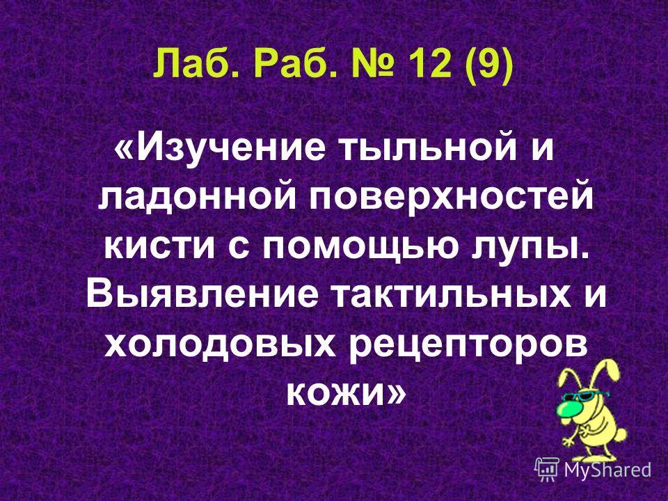 Лаб. Раб. 12 (9) «Изучение тыльной и ладонной поверхностей кисти с помощью лупы. Выявление тактильных и холодовых рецепторов кожи»