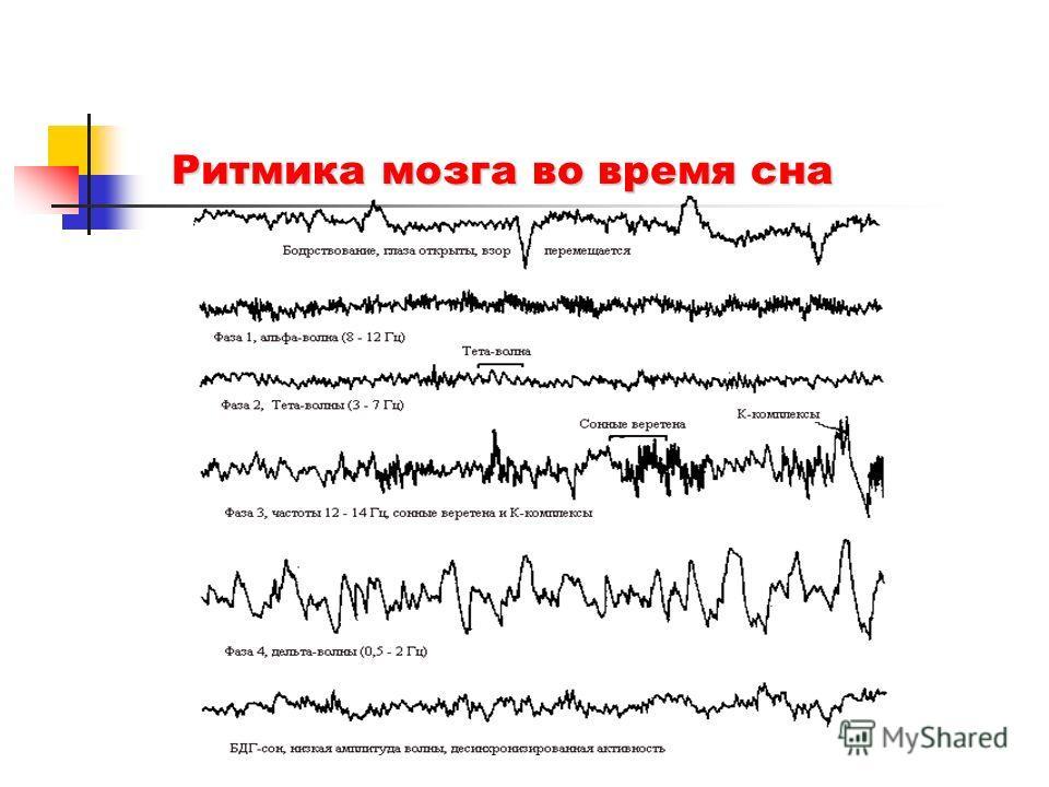 Ритмика мозга во время сна