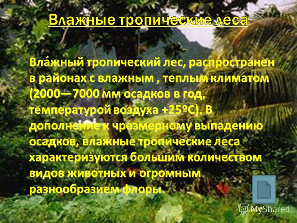 Вла́жный тропический лес, распространен в районах с влажным, теплым климатом (20007000 мм осадков в год, температурой воздуха +25ºC). В дополнение к чрезмерному выпадению осадков, влажные тропические леса характеризуются большим количеством видов жив