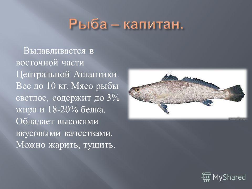 Вылавливается в восточной части Центральной Атлантики. Вес до 10 кг. Мясо рыбы светлое, содержит до 3% жира и 18-20% белка. Обладает высокими вкусовыми качествами. Можно жарить, тушить.