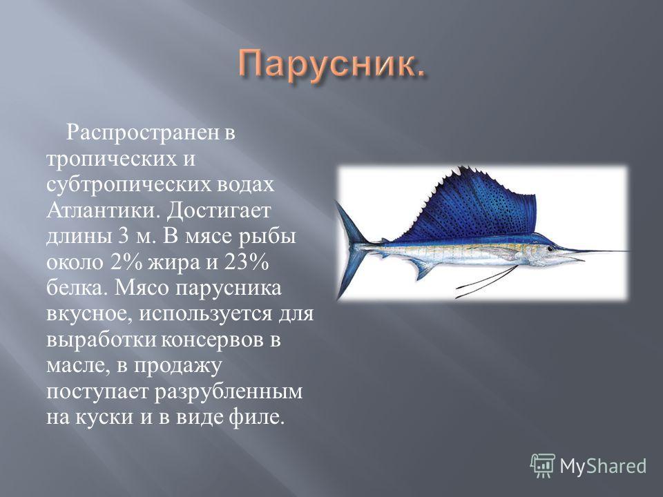Распространен в тропических и субтропических водах Атлантики. Достигает длины 3 м. В мясе рыбы около 2% жира и 23% белка. Мясо парусника вкусное, используется для выработки консервов в масле, в продажу поступает разрубленным на куски и в виде филе.