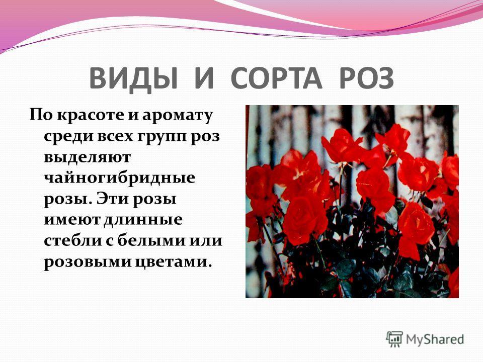 ВИДЫ И СОРТА РОЗ По красоте и аромату среди всех групп роз выделяют чайногибридные розы. Эти розы имеют длинные стебли с белыми или розовыми цветами.