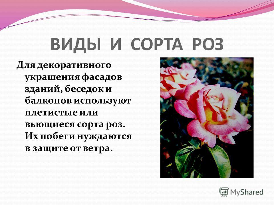 ВИДЫ И СОРТА РОЗ Для декоративного украшения фасадов зданий, беседок и балконов используют плетистые или вьющиеся сорта роз. Их побеги нуждаются в защите от ветра.