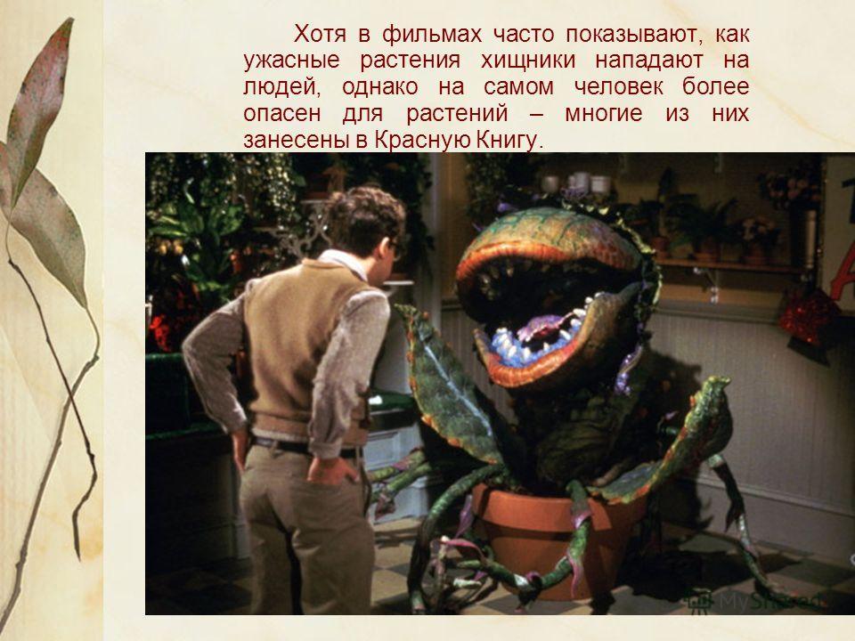 Хотя в фильмах часто показывают, как ужасные растения хищники нападают на людей, однако на самом человек более опасен для растений – многие из них занесены в Красную Книгу.