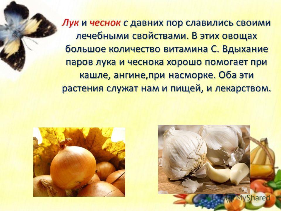 Лук и чеснок с давних пор славились своими лечебными свойствами. В этих овощах большое количество витамина С. Вдыхание паров лука и чеснока хорошо помогает при кашле, ангине,при насморке. Оба эти растения служат нам и пищей, и лекарством.