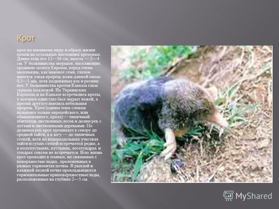 Крот крот по внешнему виду и образу жизни похож на остальных настоящих кротовых. Длина тела его 1216 см, хвоста 24 см. У большинства зверьков, населяющих среднюю полосу Европы, перед очень маленьким, как маковое семя, глазом имеется узкая прорезь кож