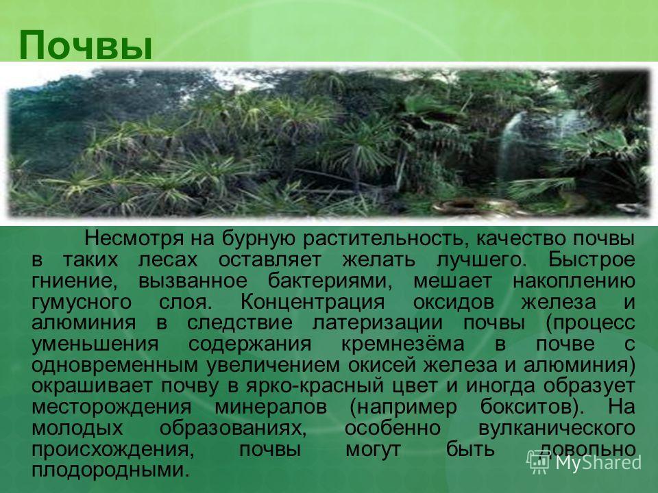 Почвы Несмотря на бурную растительность, качество почвы в таких лесах оставляет желать лучшего. Быстрое гниение, вызванное бактериями, мешает накоплению гумусного слоя. Концентрация оксидов железа и алюминия в следствие латеризации почвы (процесс уме