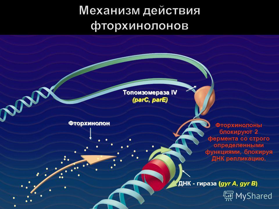 Фторхинолоны блокируют 2 фермента со строго определенными функциями, блокируя ДНК репликацию. Топоизомераза IV (parC, parE) Фторхинолон ( ДНК - гираза (gyr A, gyr B)