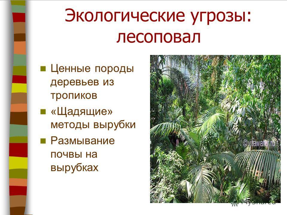 Экологические угрозы: лесоповал Ценные породы деревьев из тропиков «Щадящие» методы вырубки Размывание почвы на вырубках