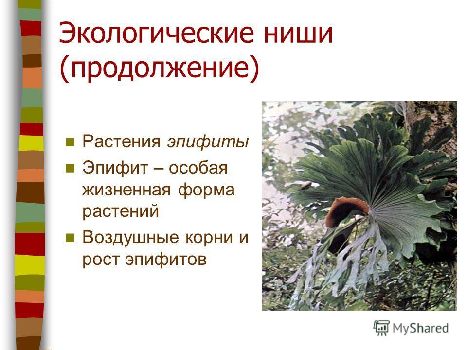 Экологические ниши (продолжение) Растения эпифиты Эпифит – особая жизненная форма растений Воздушные корни и рост эпифитов