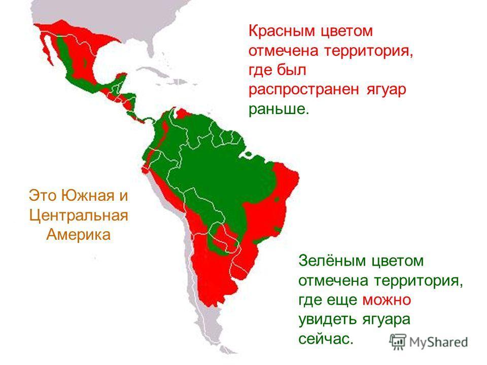 Ягуар распространён в Южной и Центральной Америке, в Мексике, в юго-западной части США