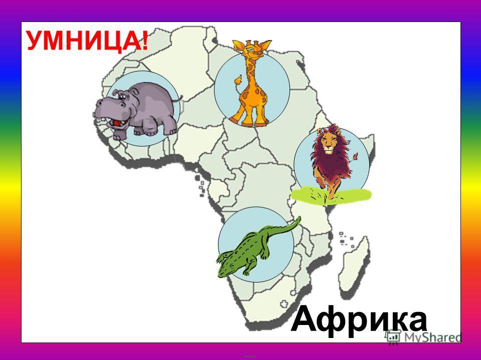 Где живут эти животные? Северная Америка Африка Австралия