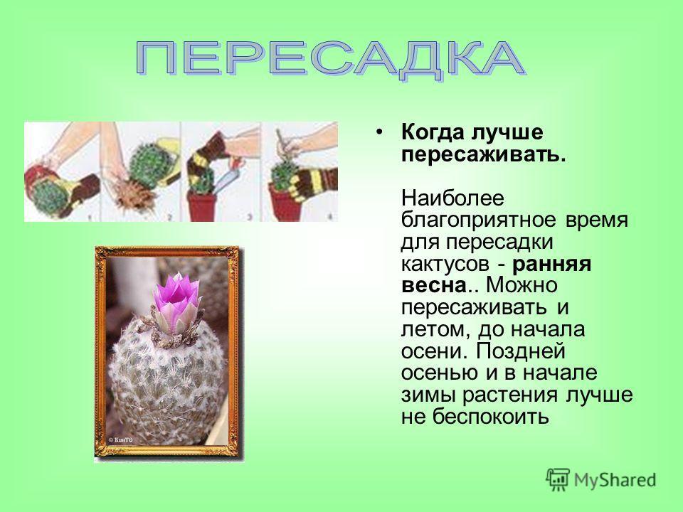 Когда лучше пересаживать. Наиболее благоприятное время для пересадки кактусов - ранняя весна.. Можно пересаживать и летом, до начала осени. Поздней осенью и в начале зимы растения лучше не беспокоить