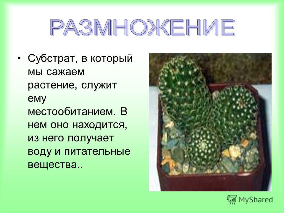 Субстрат, в который мы сажаем растение, служит ему местообитанием. В нем оно находится, из него получает воду и питательные вещества..