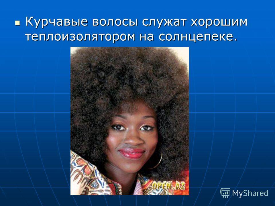 Курчавые волосы служат хорошим теплоизолятором на солнцепеке. Курчавые волосы служат хорошим теплоизолятором на солнцепеке.