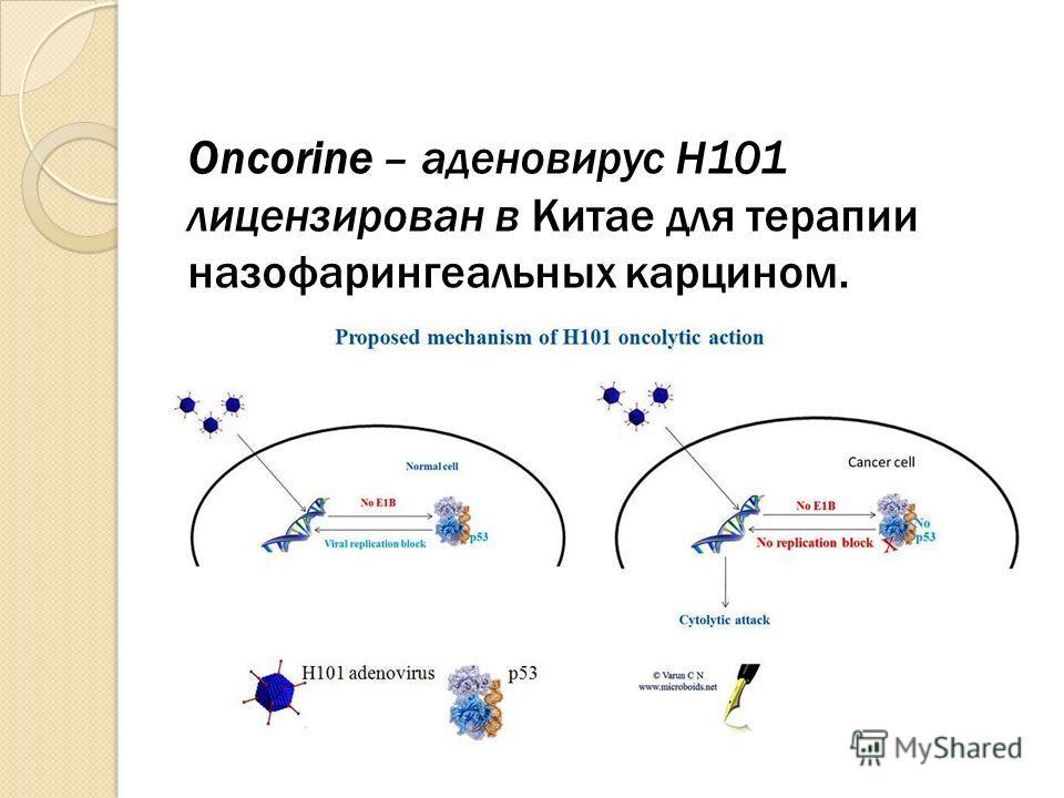 Oncorine – аденовирус H101 лицензирован в Китае для терапии назофарингеальных карцином.