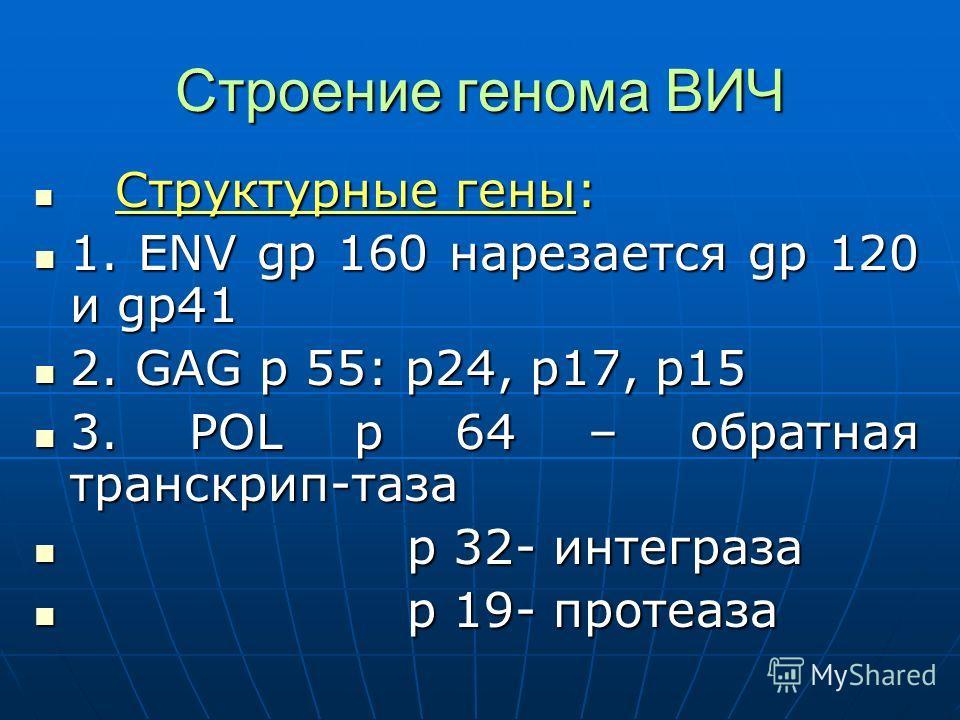Строение генома ВИЧ Структурные гены: Структурные гены: 1. ENV gp 160 нарезается gp 120 и gp41 1. ENV gp 160 нарезается gp 120 и gp41 2. GAG p 55: p24, p17, p15 2. GAG p 55: p24, p17, p15 3. POL p 64 – обратная транскрип-таза 3. POL p 64 – обратная т