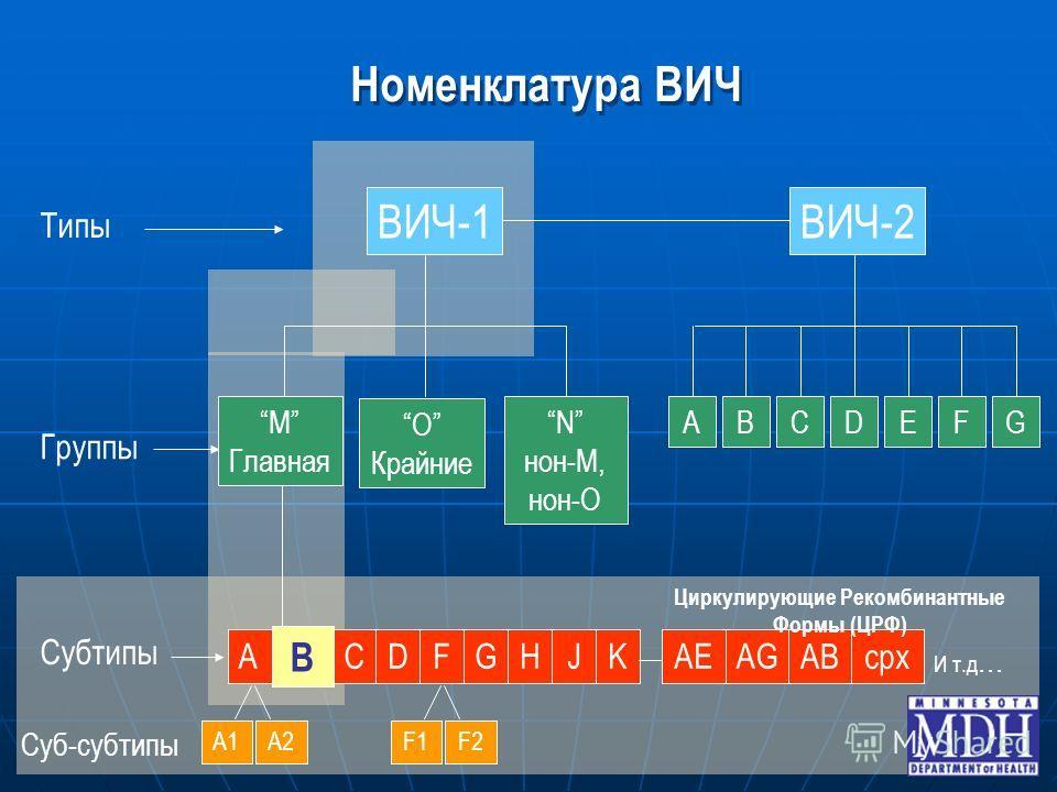 ACDGHJK B F Номенклатура ВИЧ ВИЧ-1ВИЧ-2 Типы Субтипы Группы F1F2A1A2 O Крайние N нон-M, нон-O ABCDEFGM Главная Суб-субтипы AEAG ABcpx Циркулирующие Рекомбинантные Формы (ЦРФ) И т.д …