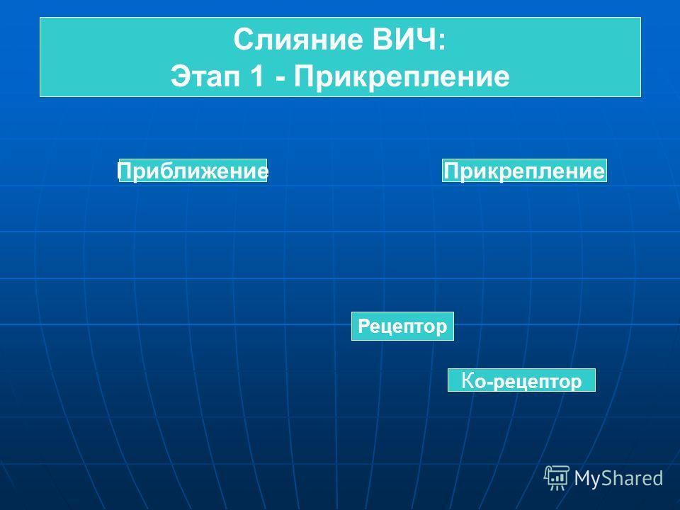 Слияние ВИЧ: Этап 1 - Прикрепление Слияние ВИЧ: Этап 1 - Прикрепление ПриближениеПрикрепление Рецептор К о-рецептор