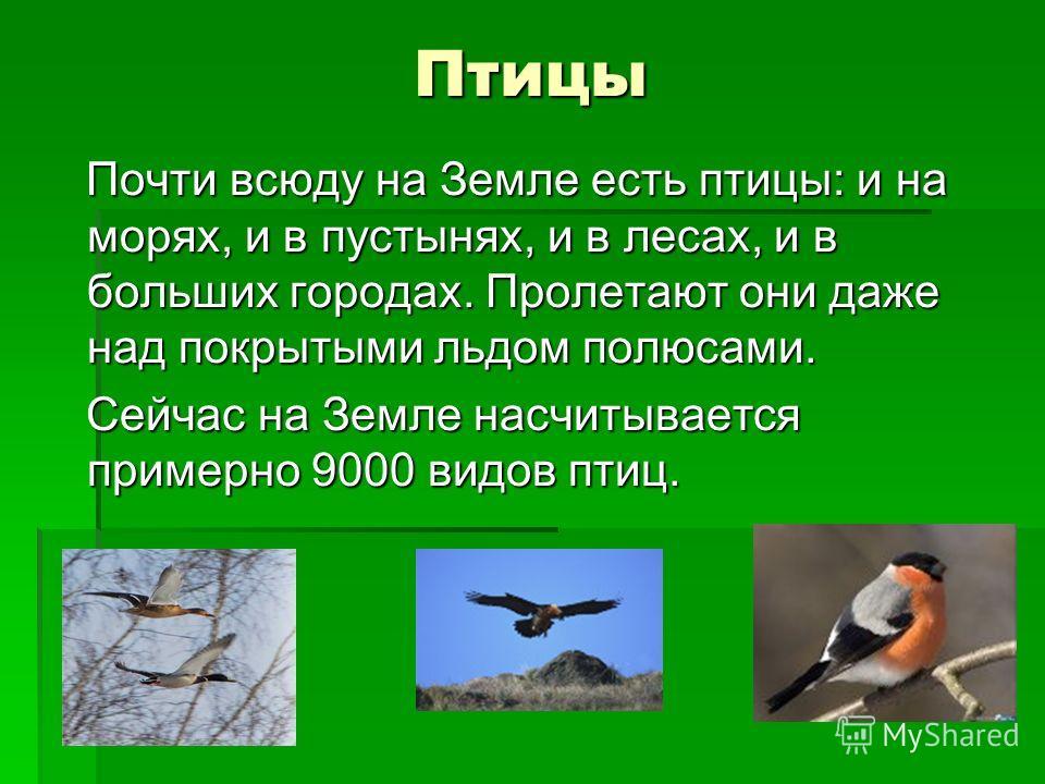 Птицы Почти всюду на Земле есть птицы: и на морях, и в пустынях, и в лесах, и в больших городах. Пролетают они даже над покрытыми льдом полюсами. Почти всюду на Земле есть птицы: и на морях, и в пустынях, и в лесах, и в больших городах. Пролетают они