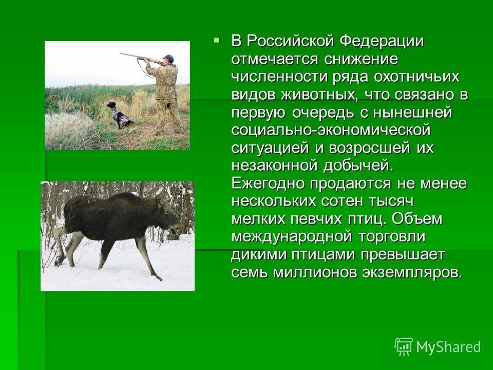 В Российской Федерации отмечается снижение численности ряда охотничьих видов животных, что связано в первую очередь с нынешней социально-экономической ситуацией и возросшей их незаконной добычей. Ежегодно продаются не менее нескольких сотен тысяч мел