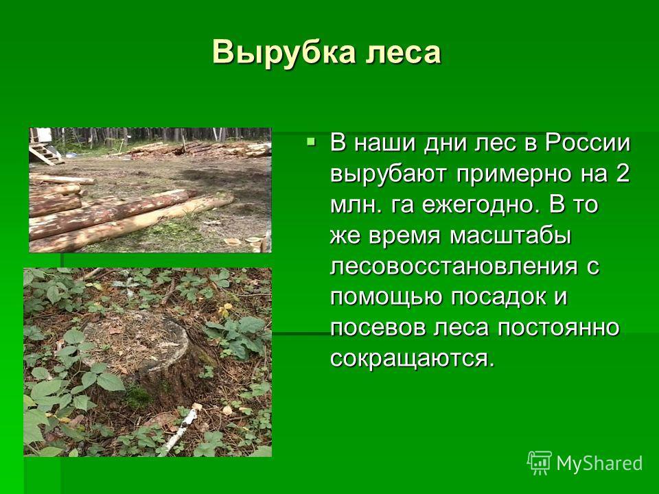 В наши дни лес в России вырубают примерно на 2 млн. га ежегодно. В то же время масштабы лесовосстановления с помощью посадок и посевов леса постоянно сокращаются. В наши дни лес в России вырубают примерно на 2 млн. га ежегодно. В то же время масштабы
