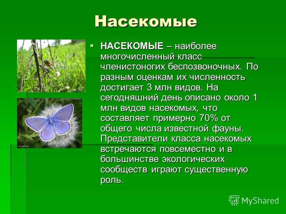 Насекомые НАСЕКОМЫЕ – наиболее многочисленный класс членистоногих беспозвоночных. По разным оценкам их численность достигает 3 млн видов. На сегодняшний день описано около 1 млн видов насекомых, что составляет примерно 70% от общего числа известной ф
