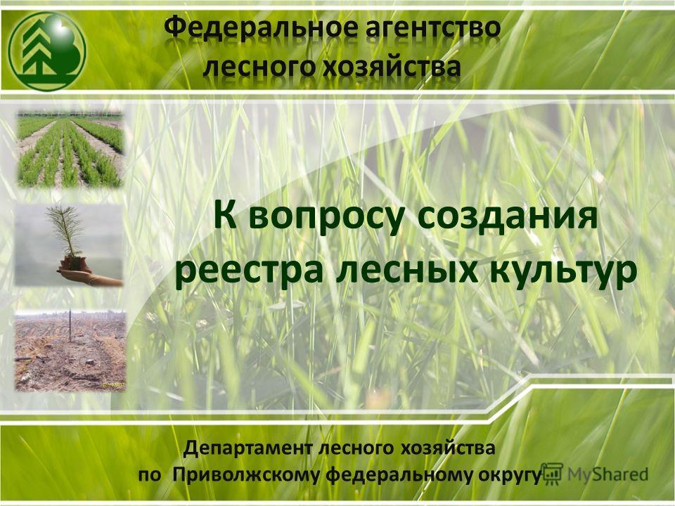 Департамент лесного хозяйства по Приволжскому федеральному округу К вопросу создания реестра лесных культур