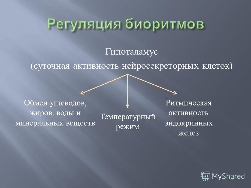 Гипоталамус (суточная активность нейросекреторных клеток) Обмен углеводов, жиров, воды и минеральных веществ Температурный режим Ритмическая активность эндокринных желез