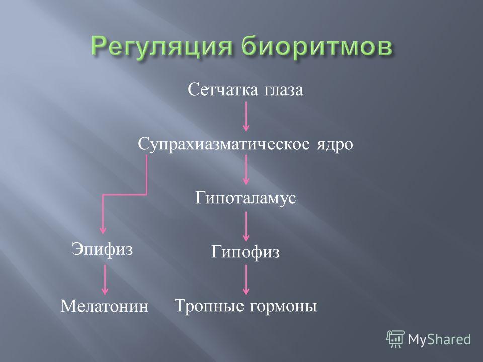 Сетчатка глаза Супрахиазматическое ядро Гипоталамус Гипофиз Тропные гормоны Эпифиз Мелатонин