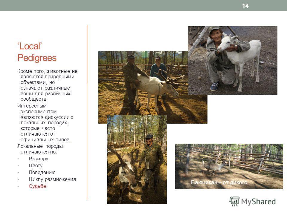 Local Pedigrees Кроме того, животные не являются природными объектами, но означают различные вещи для различных сообществ. Интересным экспериментом являются дискуссии о локальных породах, которые часто отличаются от официальных типов. Локальные пород