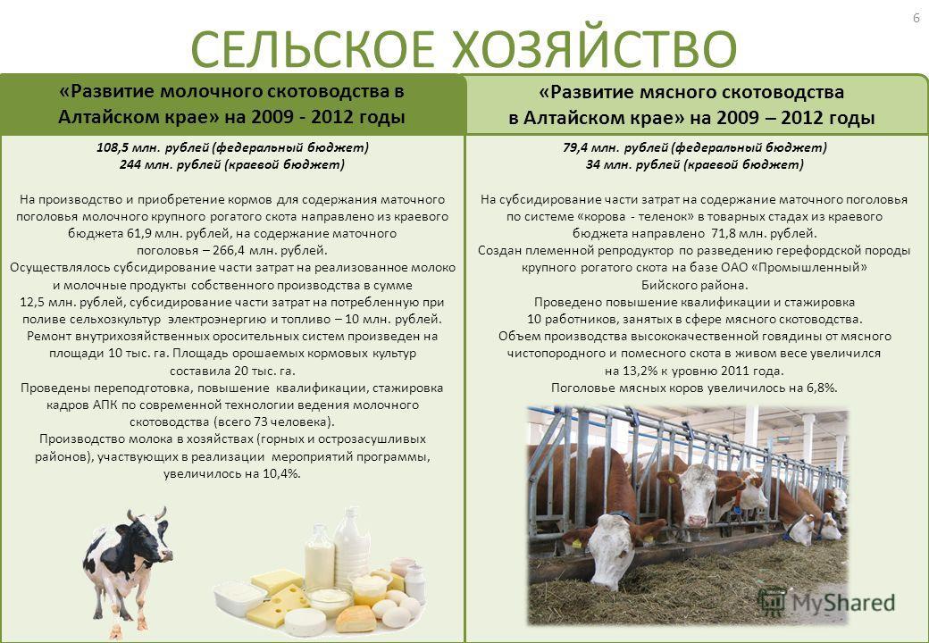 79,4 млн. рублей (федеральный бюджет) 34 млн. рублей (краевой бюджет) На субсидирование части затрат на содержание маточного поголовья по системе «корова - теленок» в товарных стадах из краевого бюджета направлено 71,8 млн. рублей. Создан племенной р