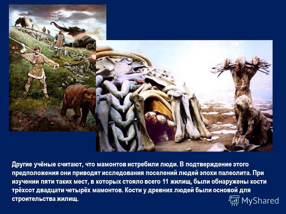 Другие учёные считают, что мамонтов истребили люди. В подтверждение этого предположения они приводят исследования поселений людей эпохи палеолита. При изучении пяти таких мест, в которых стояло всего 11 жилищ, были обнаружены кости трёхсот двадцати ч