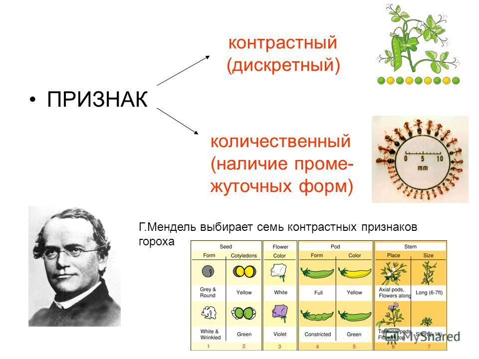 контрастный (дискретный) ПРИЗНАК количественный (наличие проме- жуточных форм) Г.Мендель выбирает семь контрастных признаков гороха
