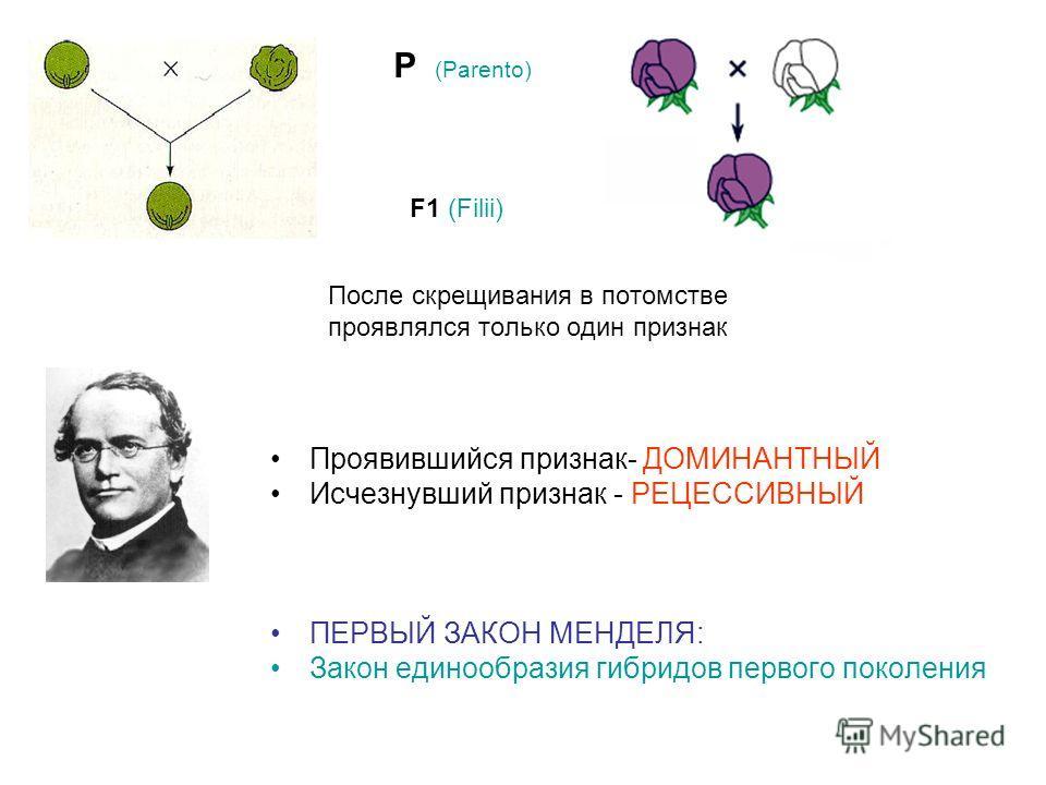 После скрещивания в потомстве проявлялся только один признак Проявившийся признак- ДОМИНАНТНЫЙ Исчезнувший признак - РЕЦЕССИВНЫЙ ПЕРВЫЙ ЗАКОН МЕНДЕЛЯ: Закон единообразия гибридов первого поколения P (Parento) F1 (Filii)
