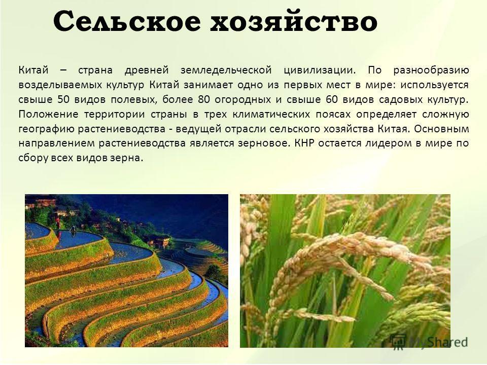 Китай – страна древней земледельческой цивилизации. По разнообразию возделываемых культур Китай занимает одно из первых мест в мире: используется свыше 50 видов полевых, более 80 огородных и свыше 60 видов садовых культур. Положение территории страны