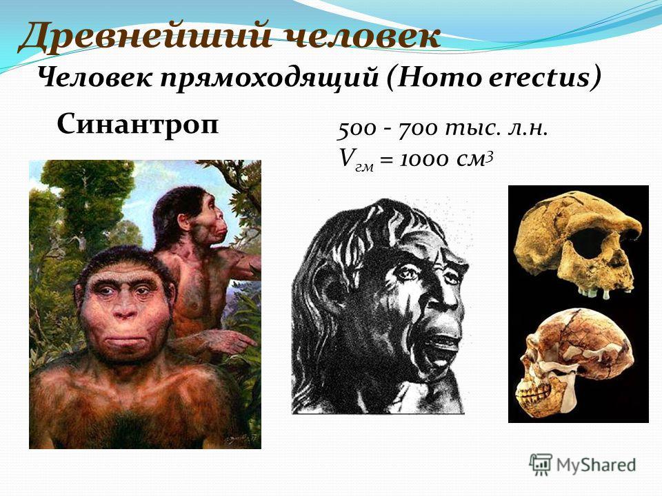 Древнейший человек 500 - 700 тыс. л.н. V гм = 1000 см 3 Человек прямоходящий (Homo erectus) Синантроп