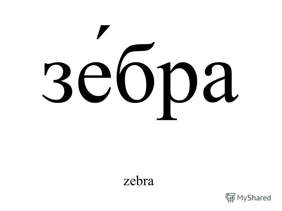 зе́бра zebra