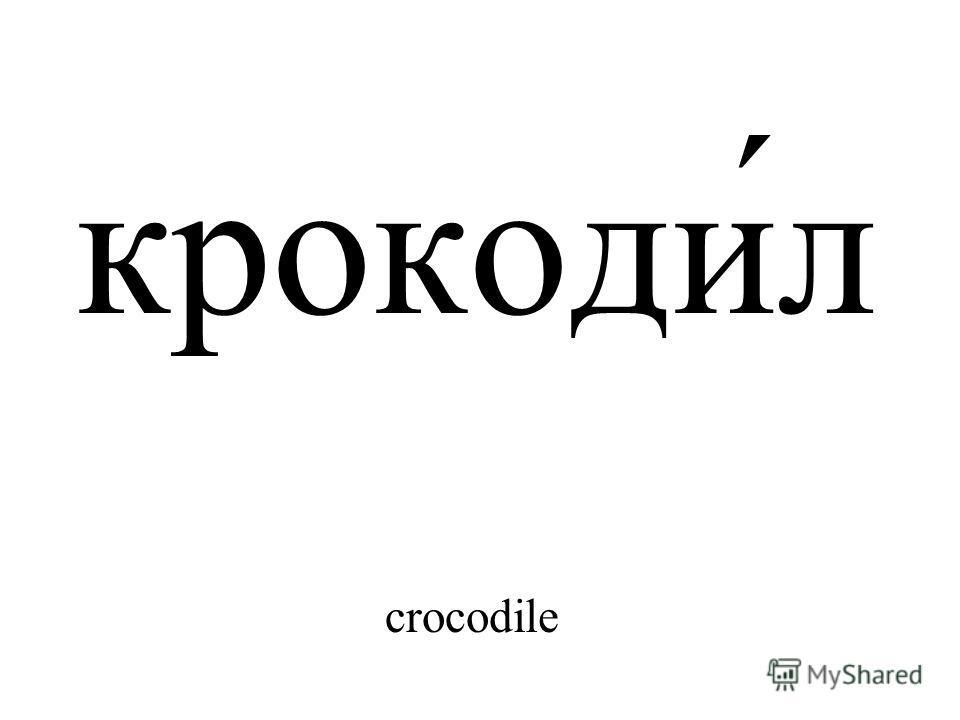 крокоди́л crocodile