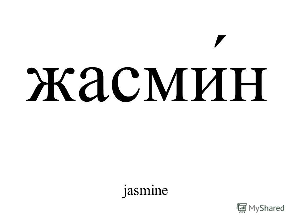 жасми́н jasmine