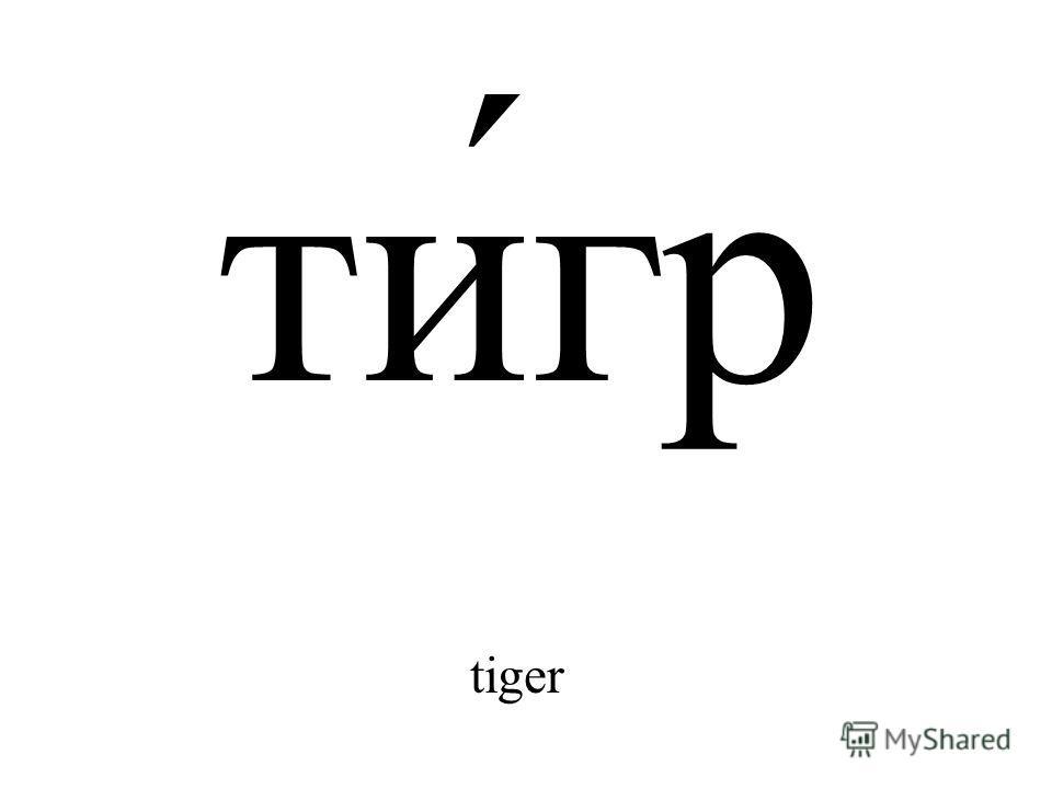 ти́гр tiger