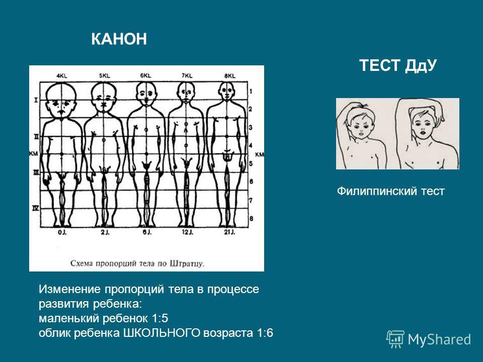Филиппинский тест Изменение пропорций тела в процессе развития ребенка: маленький ребенок 1:5 облик ребенка ШКОЛЬНОГО возраста 1:6 КАНОН ТЕСТ ДдУ