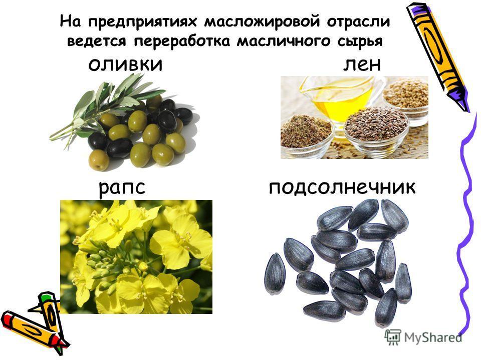 На предприятиях масложировой отрасли ведется переработка масличного сырья оливки лен рапс подсолнечник