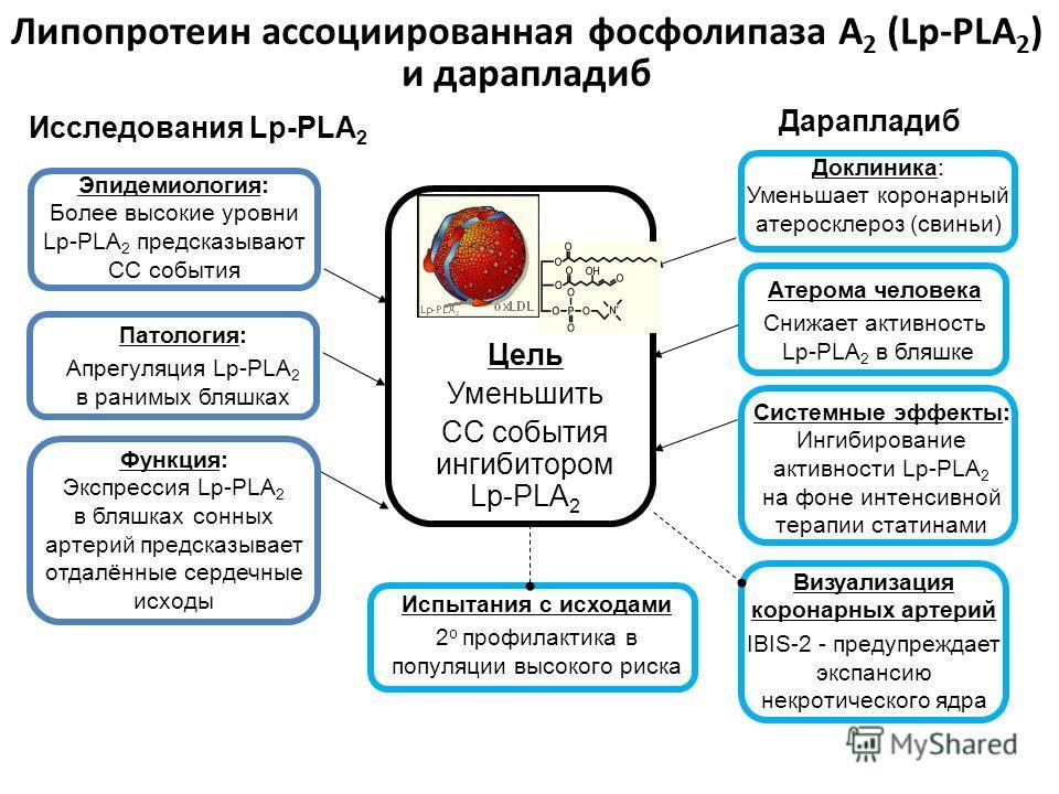 46 Липопротеин ассоциированная фосфолипаза А 2 (Lp-PLA 2 ) и дарапладиб Доклиника: Уменьшает коронарный атеросклероз (свиньи) Атерома человека Снижает активность Lp-PLA 2 в бляшке Системные эффекты: Ингибирование активности Lp-PLA 2 на фоне интенсивн