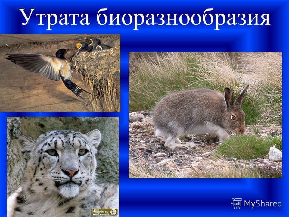 Утрата биоразнообразия