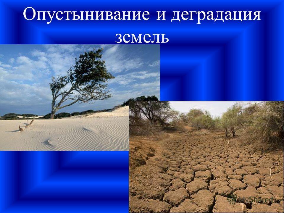 Опустынивание и деградация земель