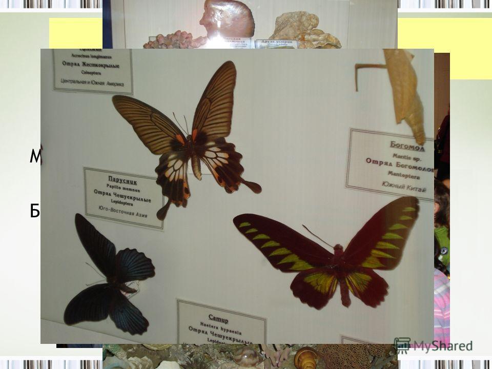 Посещение музеев Музей книги Биологический музей