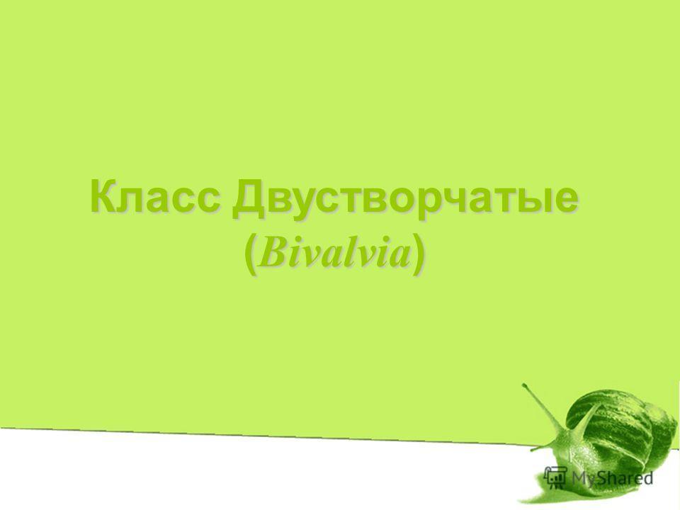 Класс Двустворчатые ( Bivalvia )
