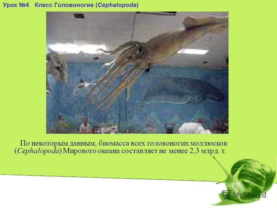Урок 4 Класс Головоногие (Cephalopoda) По некоторым данным, биомасса всех головоногих моллюсков (Cephalopoda) Мирового океана составляет не менее 2,3 млрд. т.